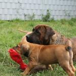 Spielen mit Tante Helga