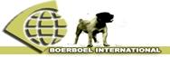 Boerboel Niederlande